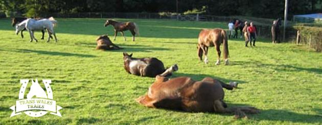 transwalesrollinghorses